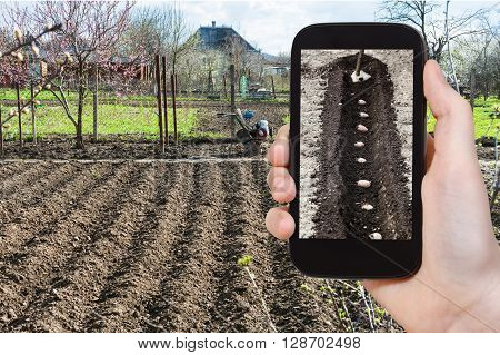 Farmer Photographs The Planting Of Potatoes