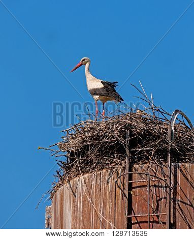 Stork standing in the nest and looks around. The nest is made to the water tower.
