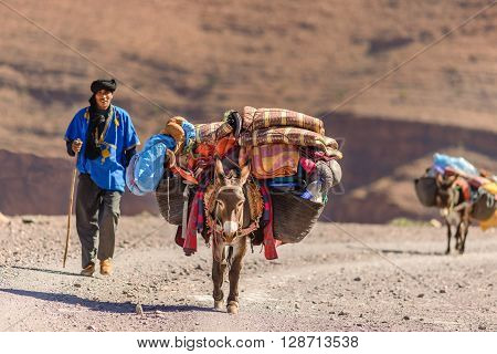 ANNMR MOROCCO - OCT 29 2015: Donkeys used to carry luggage near Annmr in Morocco.