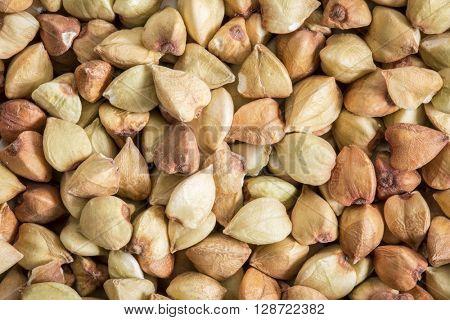buckwheat grain top view background, life size macro