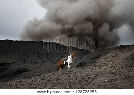 Horse and Mount Bromo is an active volcano and part of the Tengger massif in East Java Indonesia.