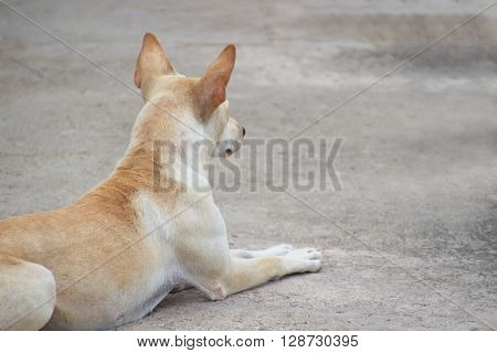 Closed up lonely dog waiting crouched on ground