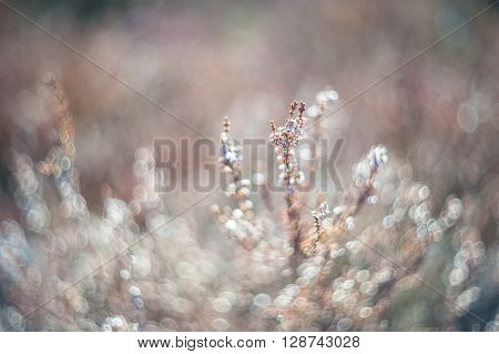 Soft Floral Background With Heather