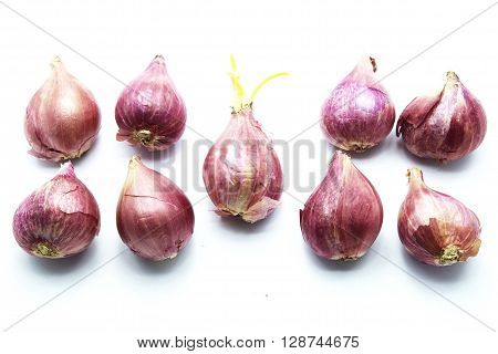 Red onions with one of green sprout, isolated on white background.