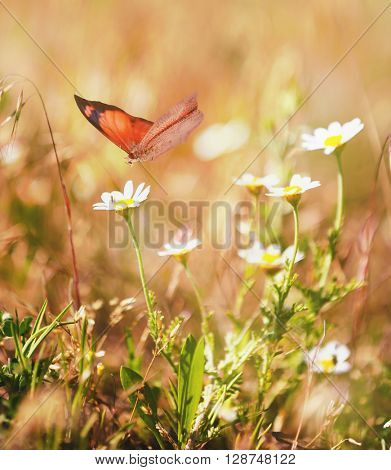 Beautiful butterfly on flower in nature