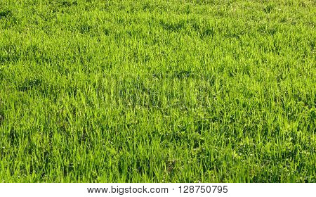 Green grass can be used as background.