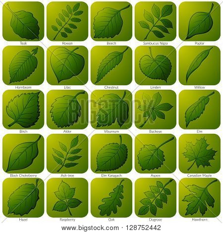 Set of Green Square Nature Icons with Pictogram Leaves of Various Plants, Trees and Shrubs. Eps10, Contains Transparencies. Vector