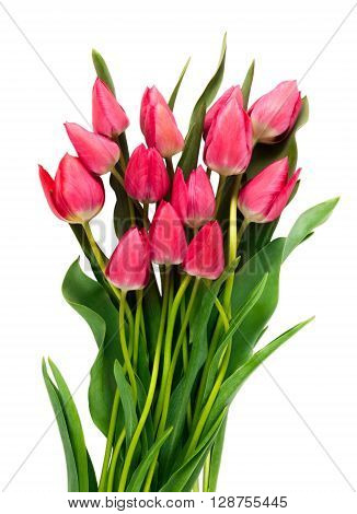 Pink tulips on white background. Tulip. Pink tulips, bouquet of tulips, tulips in bouquet, beautiful tulips, colorful tulips, green tulips petals