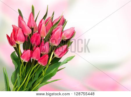 Pink tulips on color background. Tulip. Pink tulips, bouquet of tulips, tulips in bouquet, beautiful tulips, colorful tulips, green tulips petals