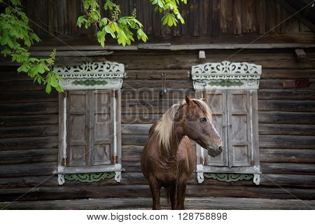 Peasant bay horse is grazed near a old rustic log farmhouse.