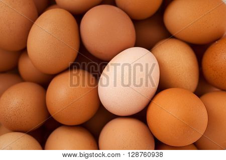 one white chicken egg among brown chicken eggs
