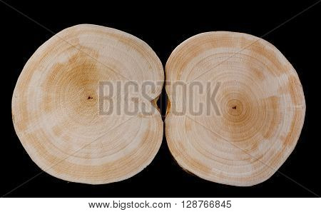 Two dried saw cut alder 200 mm diameter on a black background