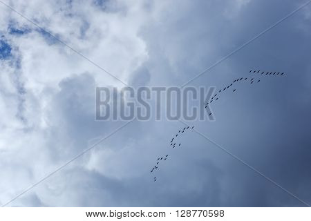Flock of birds returning home on a background of blue sky