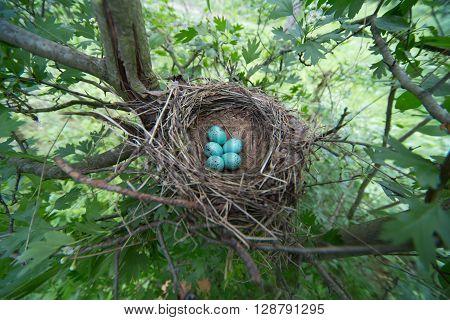 Bird's nest in their natural habitata sunny day.