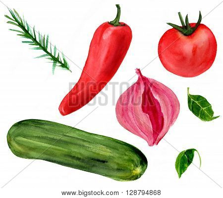 A set of watercolor vegetables: a bell pepper a red onion a tomato and a zucchini with some basil leaves and a rosemary branch hand painted in watercolors in a loose manner on white