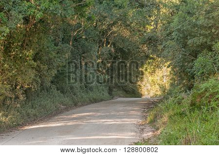 The road through the indigenous Knysna Forest to Millwood