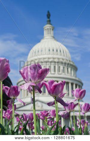 US Capitol Building in Washington DC - USA