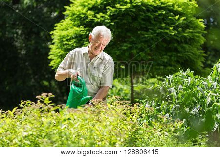 Man Wartering The Plants
