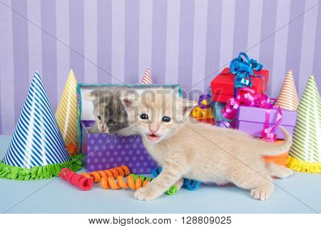 Two One Month Old Kittens In A Pile Of Birthday Boxes