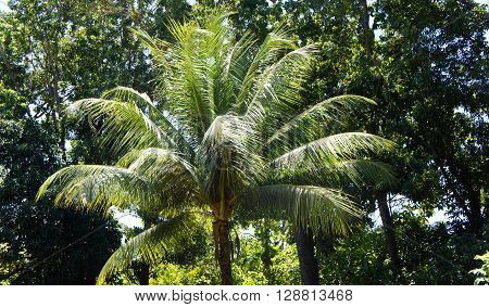 Bright green tropical rainforest . Philippines. Palawan Island .