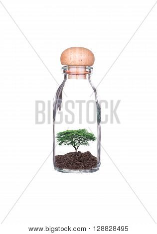 Trees planted in glass bottles isolated on white background. Ecology concept with Green Eco Earth and Trees. Eco friendly.