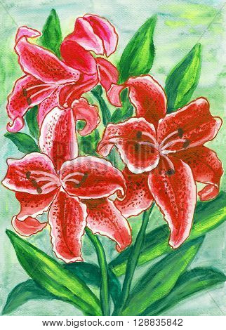 Red lilies hand painted picture in watercolor.