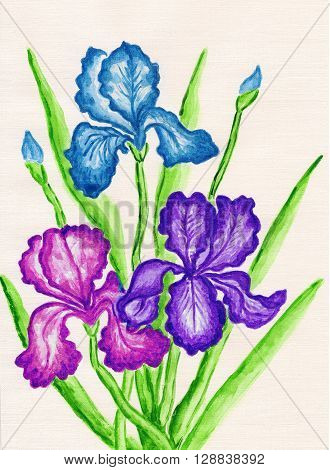 three irises of different colours hand painted picture watercolours.