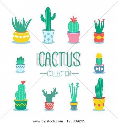 Cactuses and houseplants in pots. Vector cartoon illustration.