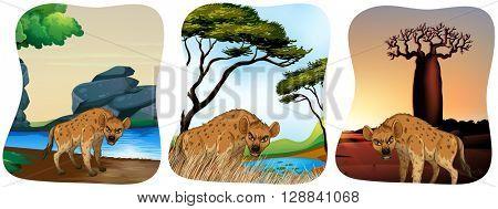 Hyenas in the field illustration