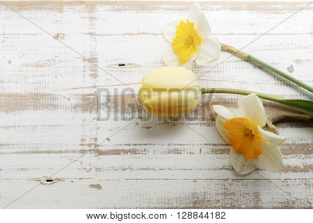 Bouquet of yellow spring daffodils on white rustic wooden background with copy space horizontal top view