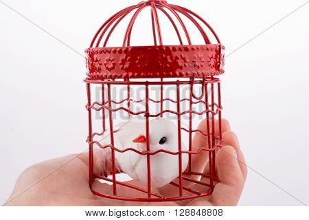 Bird in a birdcage  on a white background