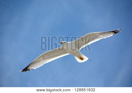 The blue above a yellow-legged seagull.A seagull in flight on a sunny day
