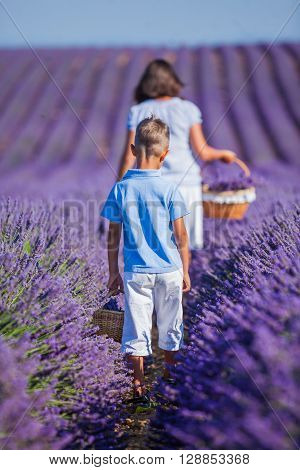 Back view of baby boy with his mother walking in lavender summer field near Valensole. Provence, France.