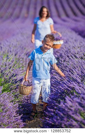 Happy baby boy with his mother walking in lavender summer field near Valensole. Provence, France.