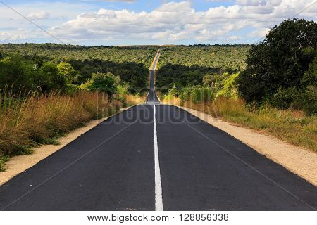 Forest With Road At National Park Zombitse In Madagascar