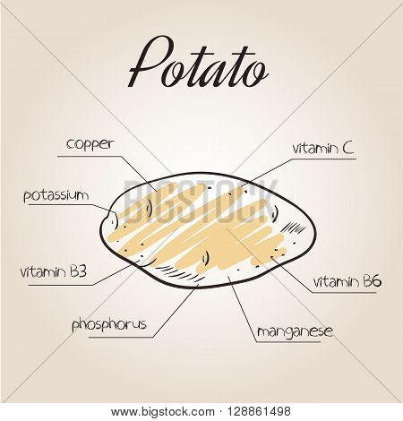 vector illustration of nutrients list for potato.