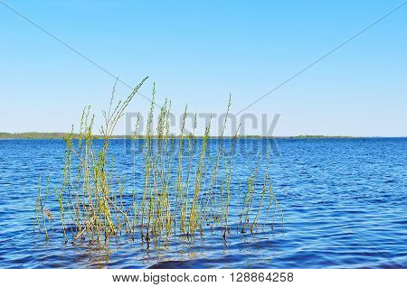 Spring water landscape - Volkhov river near the Ilmen lake with flooded branches on the foreground. Spring colorful water landscape.