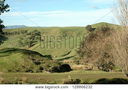 Countryside with rolling hills meadows trees and blue skies in Matamata New Zeland