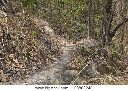 Trail On Hill In Forest For Hiking Or Trekking