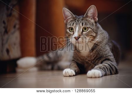 The striped cat with white paws lies on a floor.