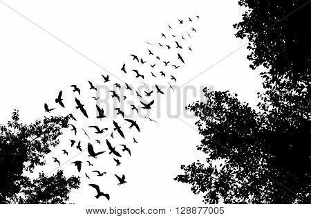 Bird Wedge And Trees Silhouettes On White Background. Vector Illustration