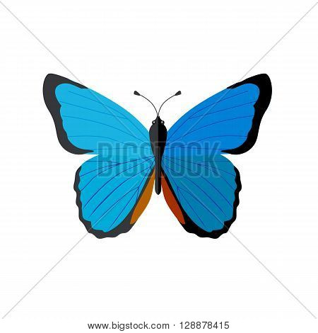 Insects butterflies isolated on white background. Beautiful butterfly with big wings and elegant blue and black colors pattern. Insect flying isolated on white backdrop. Vector ilustration