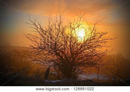 Sun rising thru the fog behind a bush