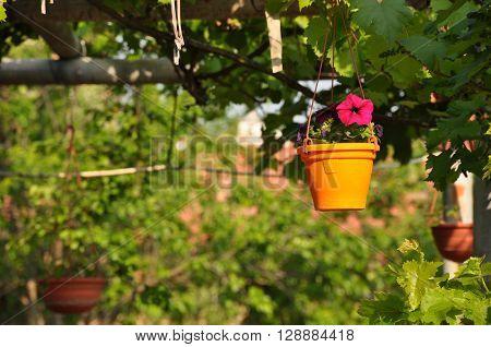 orange, pink, garden, hanging, pot, petunia, suspended