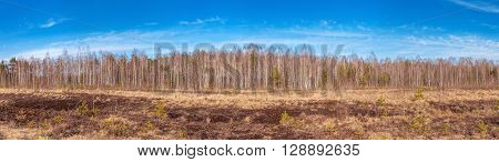 Panorama of peat bog in the spring sunny day.