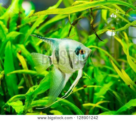 fish swimming in an aquarium, tank, tropical,