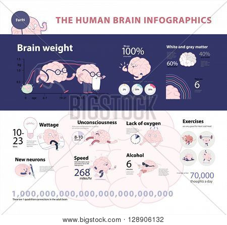Human brain infographics set 2, cartoon vector isolated images accompanied with statistic facts and graphs, a part of Brain collection