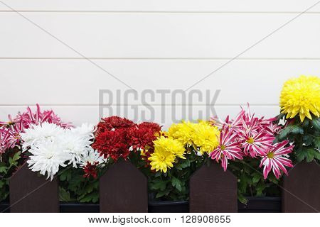 Decorative Flowers Outside The House. Copy Space On White Background