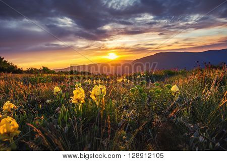 Spring landscape in mountains with flower sunrise shot
