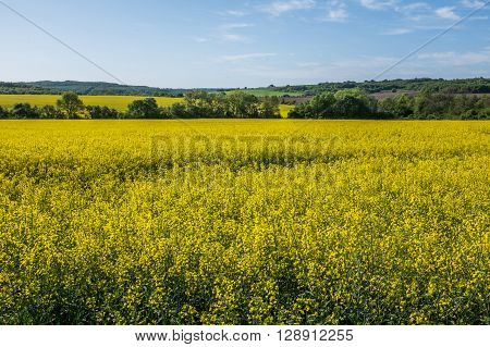 Picturesque landscape view of crop fields farmland